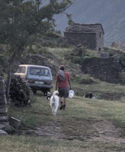 アルフォンソと犬たち