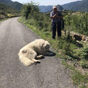 ビオで羊飼いとピレネー犬