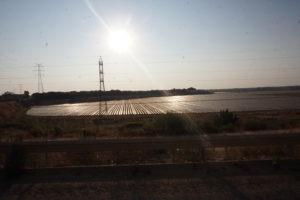 マサゴンの畑