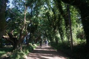 サンチアゴの道、サリアを出て歩く道