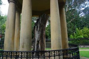 ゲルニカに残る聖木